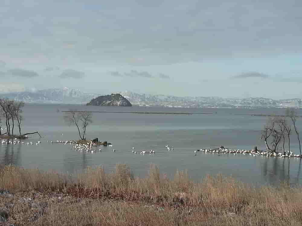 琵琶湖-水鳥公園